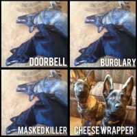 dog_doorbell_cheese